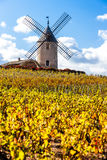 Beaujolais, Rhone-Alpes, France Stock Images