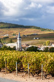 Beaujolais, Rhone-Alpes, Francia Immagine Stock
