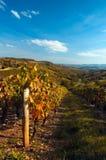Beaujolais\' vine. Autumnal landscape in Beaujolais, after grape harvest Stock Photography