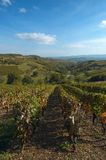 Beaujolais' vine. Autumnal landscape in Beaujolais, after grape harvest royalty free stock photos