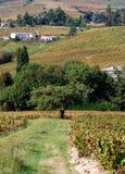 Beaujolaisweinberg, Frankreich Lizenzfreies Stockfoto