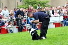Beaulieu, Hampshire, R-U - 29 mai 2017 : Maitre-chien de chien du feu du H Photos stock