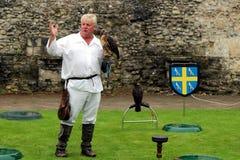 Beaulieu, Hampshire, UK - May 29 2017: Falconer with his buzzard stock photo