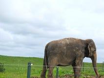 Beaultiful elefant i skyddsreserv royaltyfria foton