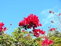Beautiful Red Flowers in Macro stock photos