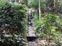 Beaultiful Rio de janeiro Botanical Garden Waterfall foto de stock royalty free