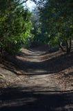 beaumont parkowy ścieżki las obraz royalty free