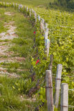 Beaune vines Royalty Free Stock Images