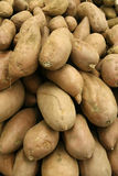 Beauregard Yams Royalty Free Stock Photography