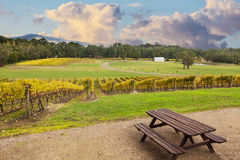 Beauriful Vineyard in Yarra Valley, Australia in autumn Royalty Free Stock Image