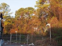 Beauté abandonnée d'arbre du soleil de bâtiment images stock