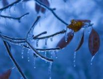 Beauté bleue gelée Photos stock