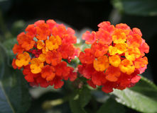 Beauté cachée 5 Images libres de droits