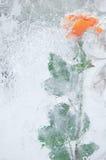 beauté congelée Photos stock