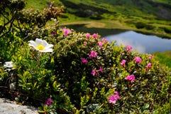 Beauté d'été Photo libre de droits