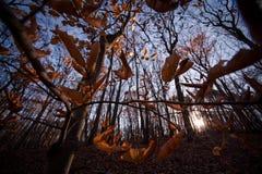 Beauté d'automne Photos libres de droits