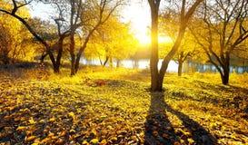 Beauté d'automne sur la rivière Photo stock