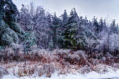 Beauté d'hiver image stock
