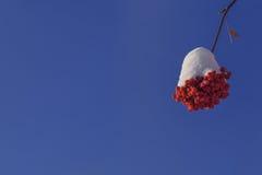Beauté d'une cendre de montagne d'hiver Photo stock