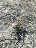 Beauté dans le désert Images stock