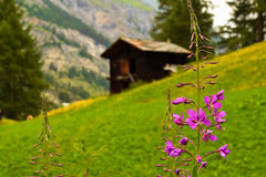Beauté dans Zermatt Photo stock