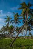 Beauté de côté de mer dans Chidambaram, Inde du sud Photographie stock