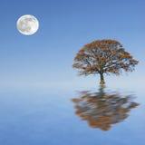 Beauté de crépuscule d'automne illustration de vecteur