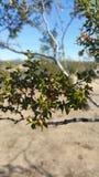 Beauté de désert photographie stock