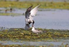 Beauté de delta de Danube images libres de droits