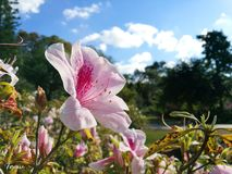 beauté de fleur Photos libres de droits