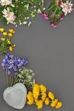 Beauté de fleur de ressort Images libres de droits