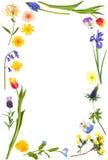 Beauté de fleur de source Photo stock