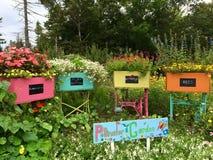 Beauté de jardin Photo libre de droits
