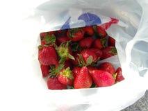 Beauté de la fraise rouge fraîche Photos stock