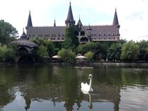 Beauté de lac nature de cygne de château photo stock