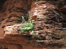 Beauté de nature photos libres de droits