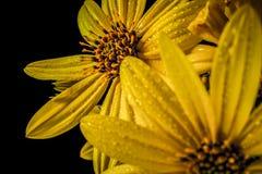 Beauté de nature photographie stock libre de droits