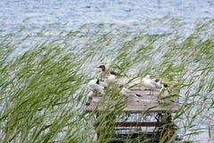 Beauté de nature Photo stock