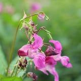 Beauté de nature de fleur après pluie Images stock
