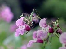 Beauté de nature de fleur après pluie Photos libres de droits