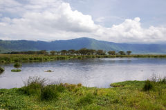 Beauté de nature près de lac Manyara avec des hippopotames Photographie stock libre de droits