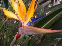 Beauté de nature que Dieu a créée Photographie stock