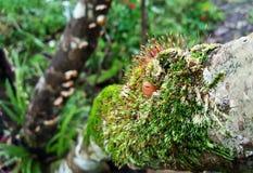 Beauté de nature sur l'écorce de l'arbre Image libre de droits