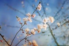 Beauté de printemps et d'esprit de ressort Images libres de droits