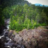 Beauté de région forestière inexploitée Image stock