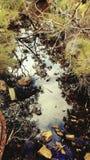 Beauté de rivière Images libres de droits