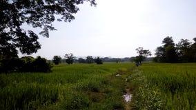 Beauté de rizière Images libres de droits