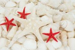 Beauté de Shell photographie stock libre de droits