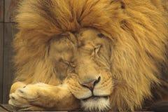 Beauté de sommeil Images libres de droits