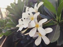 Beauté des fleurs images libres de droits